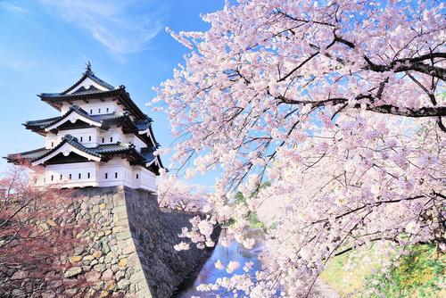 Hoa anh đào có ý nghĩa như thế nào đối với người Nhật Bản? Giới thiệu ba loài hoa anh đào chính mà Nhật Bản tự hào_Sub 3.jpg